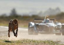 Formula E contro ghepardo: sfida di velocità green [Video]