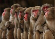 Test gas di scarico su scimmie e cavie umane, sospeso manager di Volkswagen