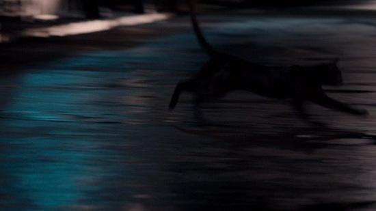 Se arriva correndo di notte si vede poco, questo è certo per un gatto nero che attraversi una strada