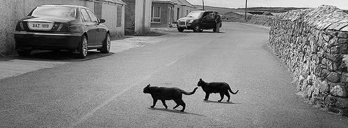 Gatto attraversa strada e auto si ribalta: al volante una suora (3)