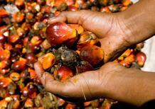 """Olio di palma nel Diesel: per la Francia non è un """"biocarburante"""""""